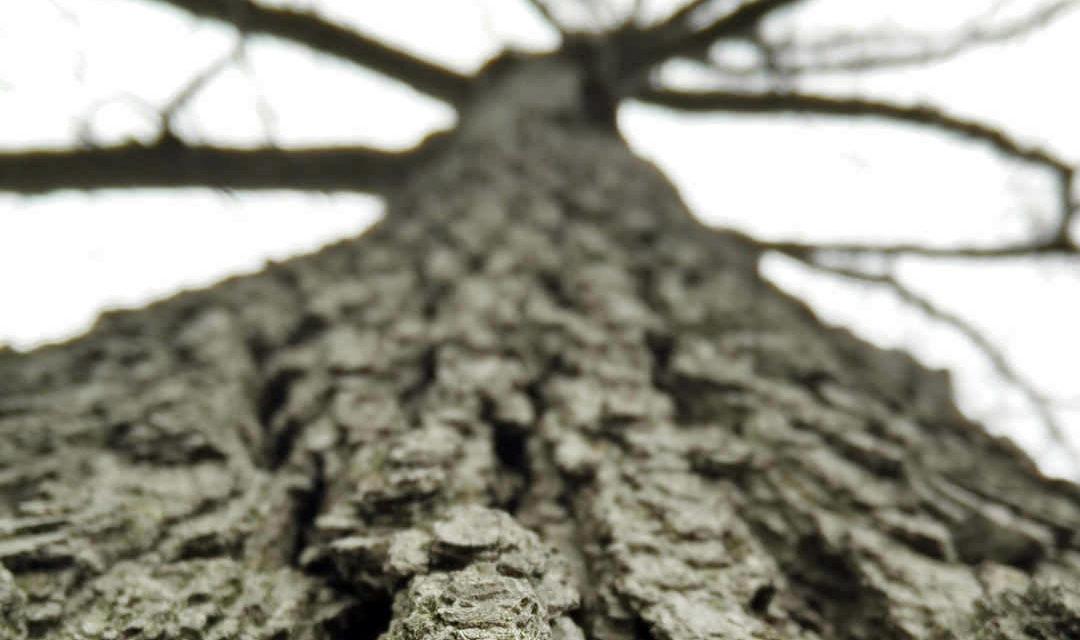 Если бы я была деревом…